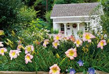 Award-Winning Daylily Varieties / Daylilies are the perfect perennial. When planted in mass, they provide all-season color in your landscape.