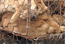 STOP ANIMAL ABUSE / by b b