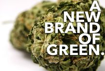 Cannabis Quotes / Sayings, quotes, and slogans about cannabis culture. #BuddyBoy #Cannabis #Marijuana