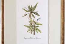 Botanical Prints by CURIO / Botanical prints, hand engraved from watercolour studies onto copper-plates by stanley Reece and hand-coloured at the studios.