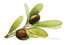 Kuns - black olives branch