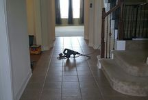 L&M Engineered wood floor nstallation in Sealy Texas