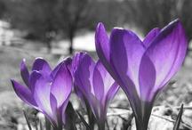 pointe de couleur violet