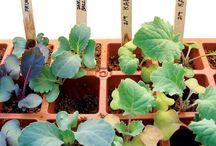 Grow - Seedlings