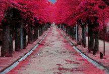 Take me here.... / by Stephanie Plew