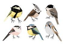 Illustration: Vögel