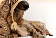 MISC: Greyhounds / by Feli