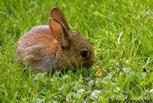 Baby rabbit / Baby rabbit pictures