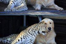Tierreich / animals