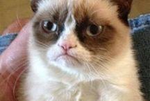 Cat of grumpiness