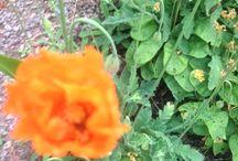 Fleurs / flower weakness