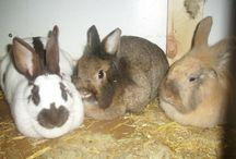 Meine Kaninchen - My bunnies