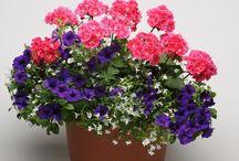 kwiaty do skrztnej