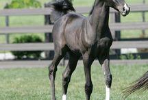 Cute foals