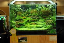 Akvarium & fiskar / Inspirerande akvarier och enkel fiskar, vill inreda vårt 720liters bättre!