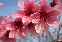 Antera / avviso di primavera