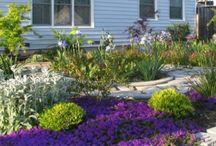 Drought Free Landscaping Ideas  | Low Water Gardening
