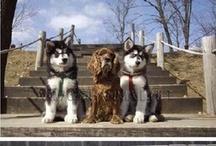 Hunde ♥️♥️♥️❤❤