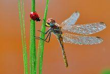 Bugs, Fly's and Creepy Crawley