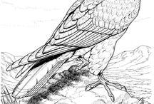 Sólyom, Falcon, Hawk