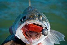 testing Ripper lure / some of the great fish cought on ripper lure  #Spin_fishing