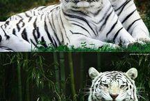 zwierzaki cudaki