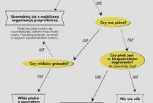 Infografika ptaki / Nasze autorskie infografiki- ciekawostki na temat ptaków. Our autror's infographic about birds.