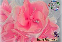 My blog TM ShUm