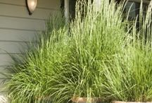 Landscaping and yard decor