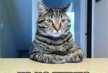 Memes de Gatitos