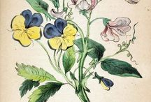 Botanical Illustrations / Botanical illustrations and other flower drawings in a similar style / by Shawna Jones