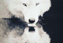 Animals/Native