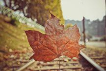 Autumn - Outono