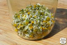 HERBS / by Heather Strehse