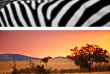 Animals around the world.