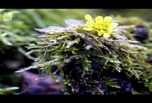 Biologia:Kevätseuranta