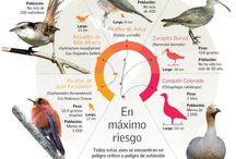 鳥類 Aves