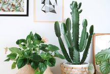 Planten in mooie (rotan)  potten