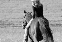 Foto mit Pferden