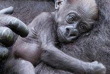 monkey business / primates / by Marilee Pittman