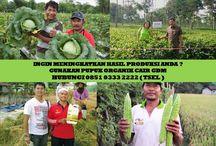 HUB 0851 0333 2222 ( TSEL ) Peluang Usaha Agribisnis / Peluang Usaha Agribisnis ,Peluang Usaha Agribisnis Pertanian,Peluang Usaha Agribisnis Peternakan,Info Peluang Usaha Agribisnis,  Apakah GDM GDM merupakan Pupuk Bio Organik Cair yang di hasilkan dari bahan-bahan organik dan bakteri yang diperlukan oleh tanaman.  BERMINAT DENGAN PELUANG DARI KAMI HUBUNGI :  0851 0333 2222 ( TSEL ) http://peluangusahaagro.com/