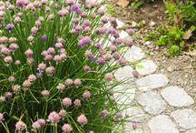 Garden path ideas - Vialetti, camminamenti da giardino idee / Materiali e forme per realizzare passaggi e pavimenti nei nostri giardini