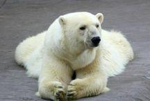 Polar Bears / by Mary Trowbridge