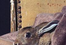 Hare & Rabbit