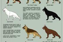 Deutsch Hunde