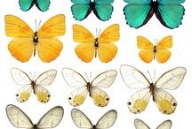 aile papillon