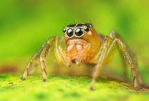 Arachnids / by Dave Edens
