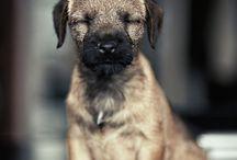 puppy love / by Dominique Chew