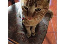 • K U R T •  / Fotografías de mi queridísimo gato kurt ❤️