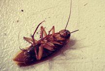 Hormigas y cucaracha